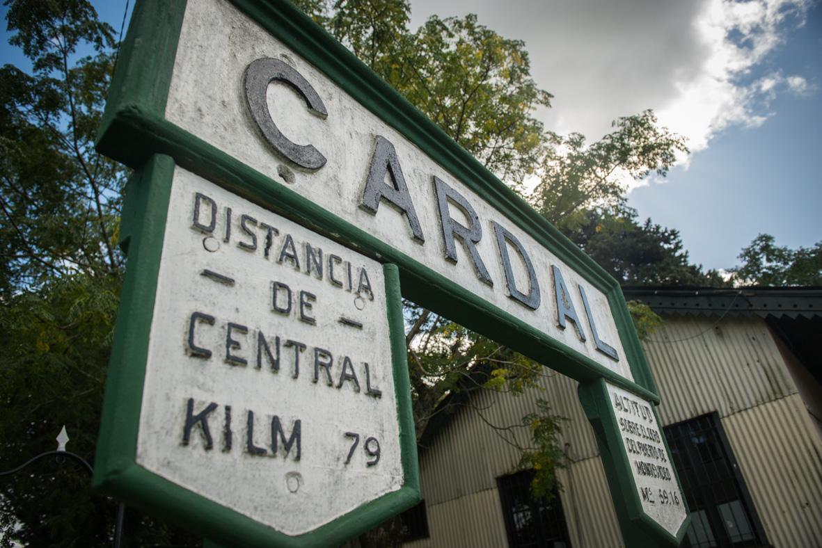 1 Cardal-11
